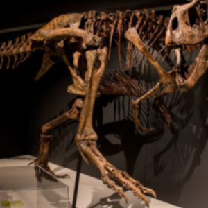 05/26-09/03 Tyrannosaurs: Meet the Family
